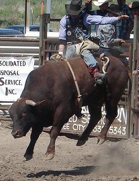 Riding_a_bull